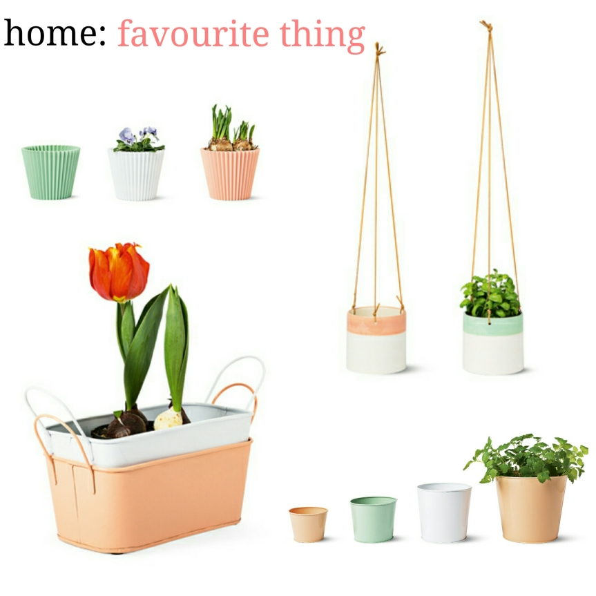 home: favourite thing [ Tiger]