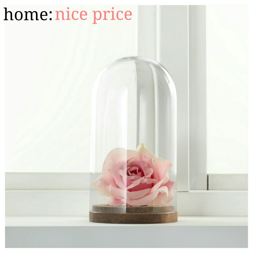 home: nice price [ display dome ]