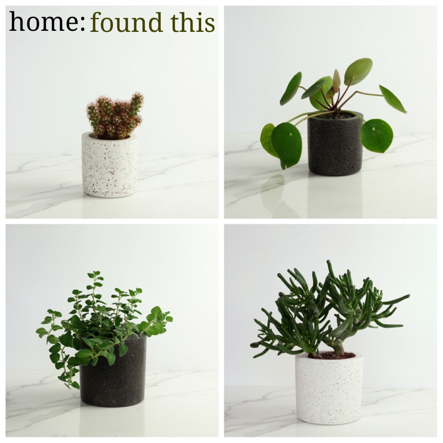 home: found this [ concrete pots ]