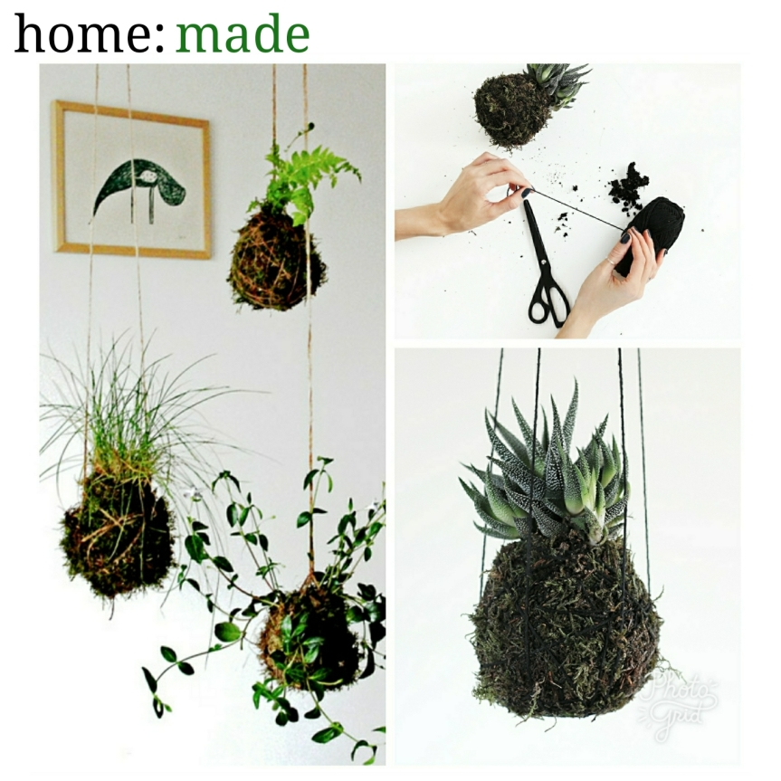 home: made [ kokedama plant ]